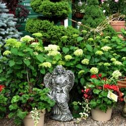 jessicas-garden-10