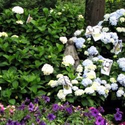 jessicas-garden-16