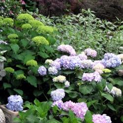 jessicas-garden-18
