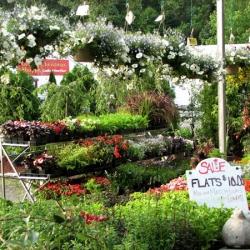 jessicas-garden-23