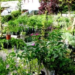jessicas-garden-47