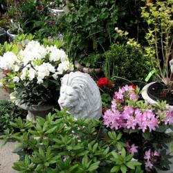 jessicas-garden-50